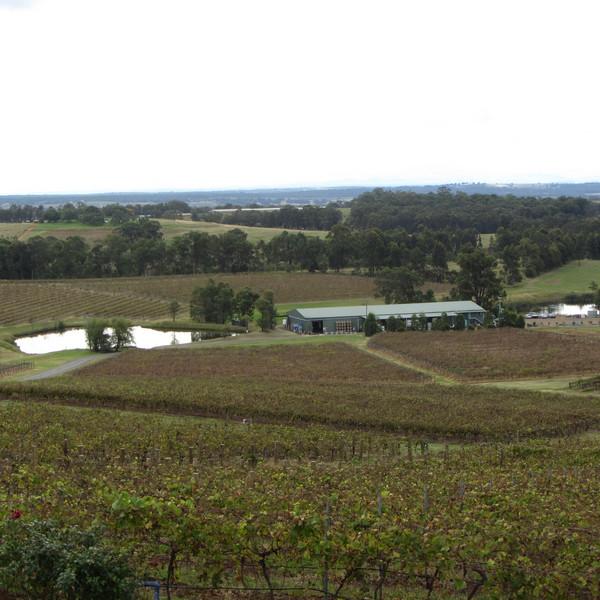 vinice panorama