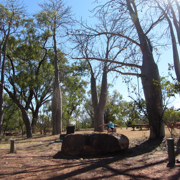 kemp s baobaby