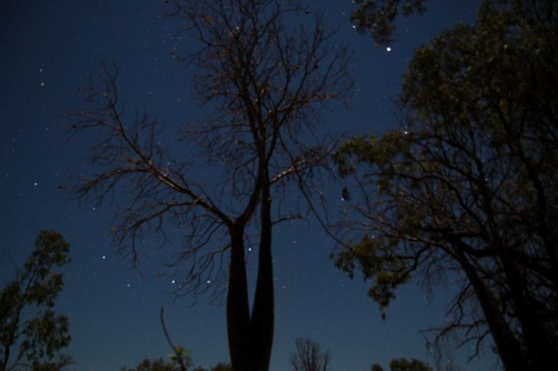 baobab v noci